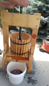 Grapes being pressed